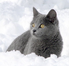 Winter DayDreamer (JK FARMS) Tags: winter cats white snow storm nature closeup clouds cat outside eyes kitten feline soft farm gray fluffy kittens greeneyes gato breathtaking graycat snowclouds deepsnow playingcats fluffywhite amazingeyes snowkitty beautifulkitten snowanimal bestofcats aplusphoto bocwinner diamondclassphotographer lmaoanimalphotoaward grayfur theperfectphotographer boc0208 catmoments