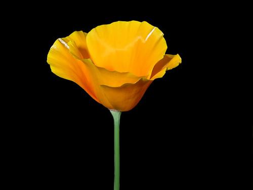 FLOWER FLUTE DSCN6987