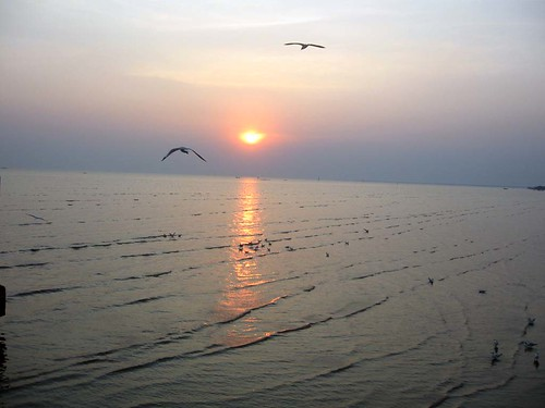 seagull - sunset - Bangpoo