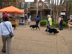 Dogs aplenty at market