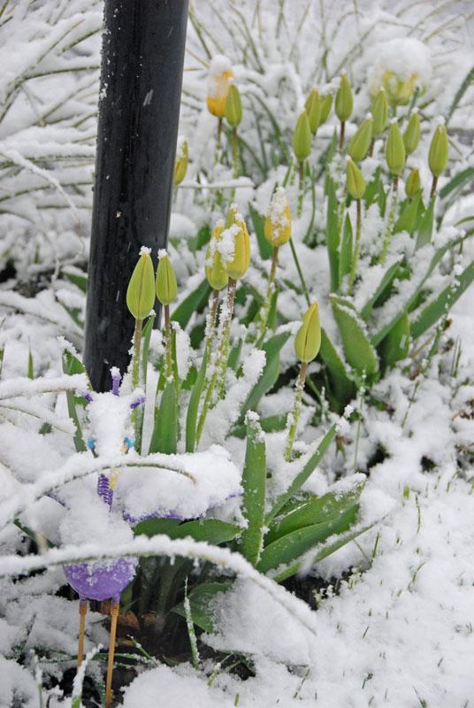 April snow 03