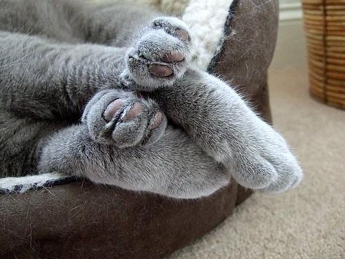 cat 2 paws