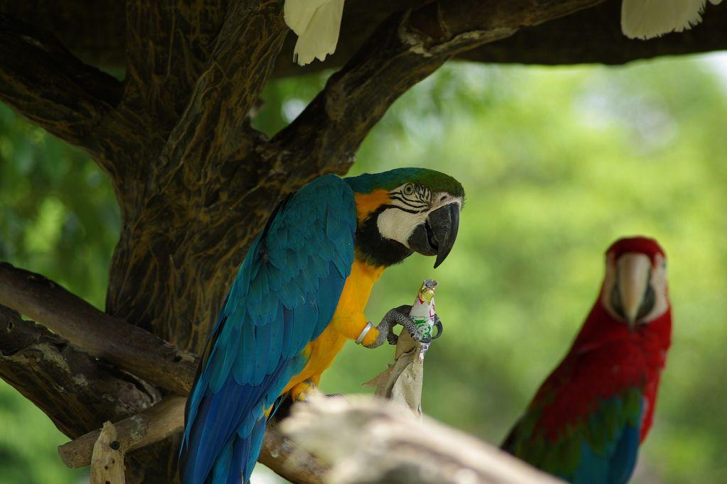 六福村DA55-300拍鳥