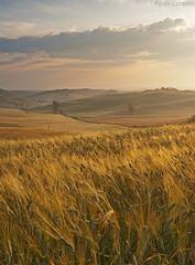 Tuscany Morning #2 (Corsaro078) Tags: sunrise landscape alba ngc tuscany siena toscana paesaggio biancoenero colline cretesenesi d90