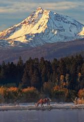 Black Butte Ranch (bnzai9) Tags: horse oregon sisters sunrise 350d 70200 blackbutte naturesfinest phalaropelake superfave