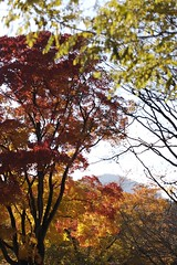 紅葉と藻岩頭