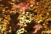 五月山の紅葉