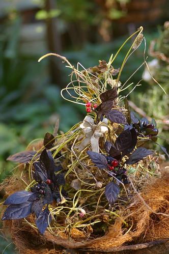 朝顔の蔓のクリスマスツリー