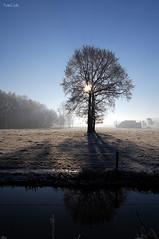 Backlight (FotoCath) Tags: blue winter ice nikon hoarfrost 2007 yourfavorite aarschot d40 nikond4o treesubject winter20072008 fotocath