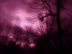 Silvan Echoes (Mr. Ducke) Tags: trees light color woods artistic expression abigfave coloursplosion