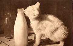 Kitty with Milk Bottle - old pc - Photochrom Co - Tunbridge Wells, Kent