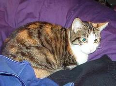 lucy3.JPG (semibold) Tags: animals lucy kitties