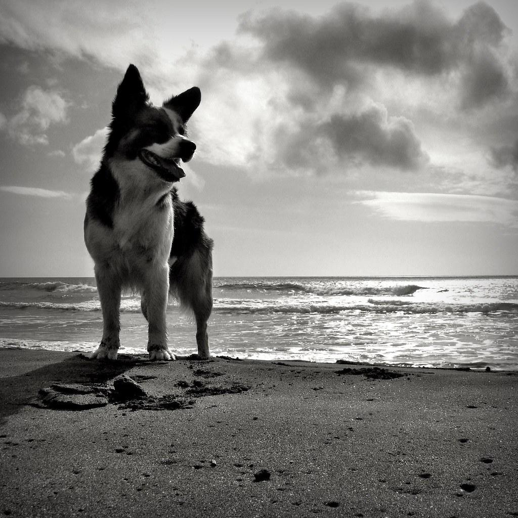 dog's play #3