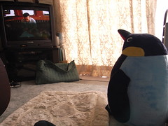 Penguin watches Nigel Marven (matsuyuki) Tags: stuffedtoy penguin stuffedanimal stuffedpenguin