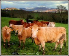 MOO MOUNTAIN. (Edward Dullard Photography. Kilkenny, Ireland.) Tags: kilkenny ireland mountain landscape photographic irland eire emeraldisle ierland dullard edwarddullard societyedward