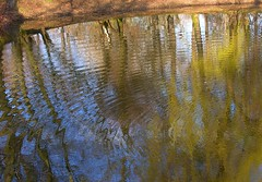 On golden-blue pond (:Linda:) Tags: park reflection tree water germany town thringen spring pond ripple jena thuringia teich reflexion baum frhling paradies thuringian frhjahr gewsser treesinspring bumeimfrhling baumimfrhling