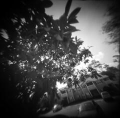 Plum Parking Lot (alternatePhotography) Tags: tree 120 holga fuji florida parking gainesville plum lot pinhole professional 400 diafine neopan