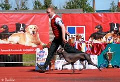 Peruvian Hairless Dog (Devilstar) Tags: show dog hairless peruvian