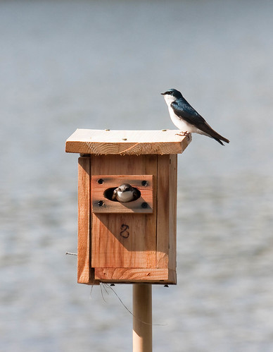Bird Feeders Vs. Bird Houses