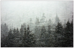 2009/05/12 - Near Lake Louise AB - Blizzard