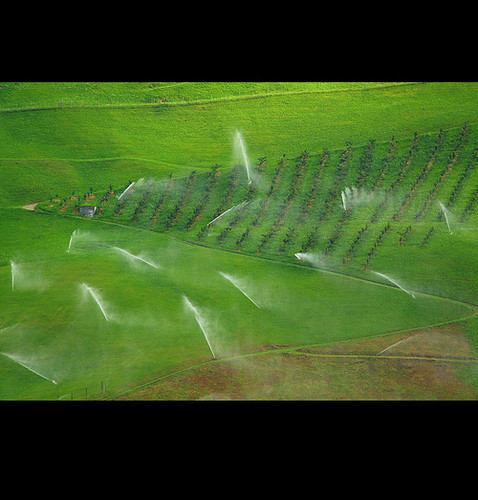Geometric irrigation