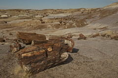 Petrified Forest National Park (nebulous 1) Tags: trees arizona landscape nationalpark nikon nps petrifiedforest petrified petrifiedwood latetriassic nebulous1