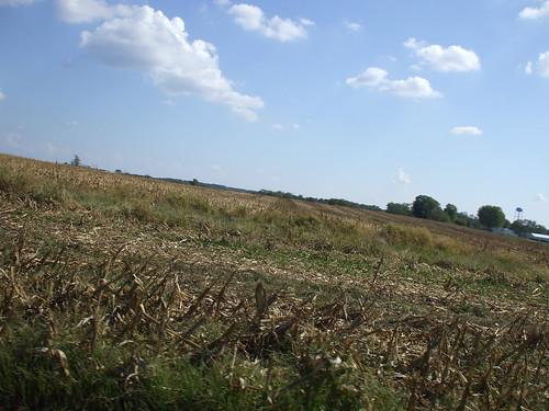 Cornfields Forever