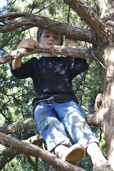Roger Climbing Tree