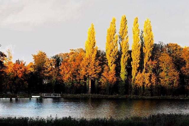 autumn tree fall water beautiful gold golden pond glow lyn