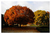 road to walk (wunderskatz) Tags: autumn tree fall nature colors beauty cemetery leaves landscape flickrsbest abigfave thegoldenmermaid wunderskatz