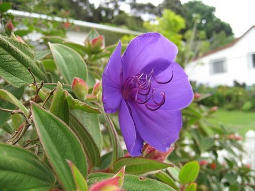 Russell flower