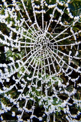 wood winter house cold macro ice home nature leaves closeup insect spider frozen leaf frost spiderweb cobweb cob abigfave