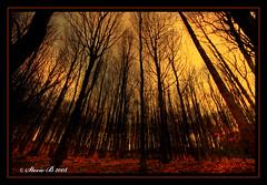 Copper Wood (stev1eb) Tags: woods coppr colour color trees sky leaves newmillerdam wakefield mothernatureatherbest flickrdiamond naturesfinest my winner mywinner betterthangood theperfectphotographer anawesomeshot platinumphoto aplusphoto diamondclassphotographer
