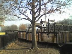 Mariel's Tree