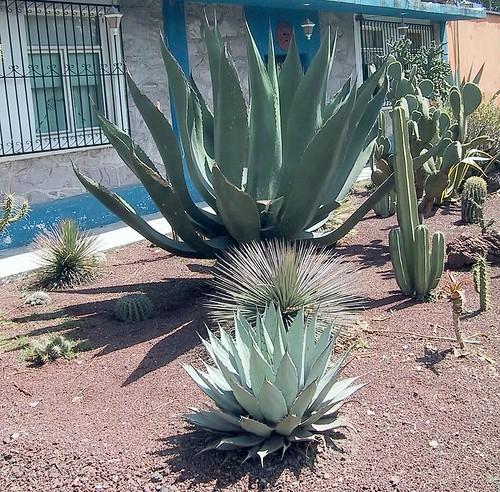 Jardín de cactaceas