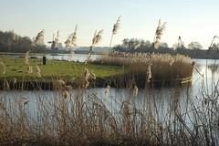 rietpunt (Ren Mouton) Tags: park holland reed nature netherlands windmill amsterdam natuur riet molen waterland wandeling 1580 denilp ttwiske 10februari2008 achtkantigebovenbinnenkruier twiskemolen basingerhorn