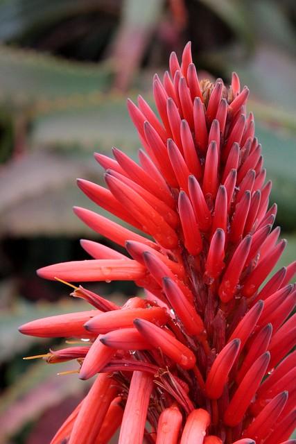 Monterey garden