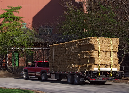 Anheuser-Busch Brewery, in Saint Louis, Missouri, USA - Hay truck