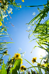 ! (Oleksandr Telesniuk) Tags: blue summer sky nature topf25 grass topv111 topf50 topv555 topv333 topv444 brich 111v1f 333v33f flickrcinated bestflickua