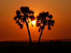 Tramonto a Palmwag (mirnab!) Tags: namibia autofocus flickraward bestcapturesaoi flickraward5 mygearandme mygearandmepremium mygearandmebronze mygearandmesilver mygearandmegold mygearandmeplatinum mygearandmediamond flickrawardgallery dblringexcellence allnaturesparadise flickrstruereflection1 flickrstruereflection2 flickrstruereflection3 flickrstruereflection4 flickrstruereflection5 eltringexcellence allofnatureswildlifelevel1 allofnatureswildlifelevel2 allofnatureswildlifelevel3 allofnatureswildlifelevel4 allofnatureswildlifelevel5 allofnatureswildlifelevel8 allofnatureswildlifelevel6 allofnatureswildlifelevel7 allofnatureswildlifelevel9 rememberthatmomentlevel4 allofnatureswildlifelevel10 rememberthatmomentlevel1 rememberthatmomentlevel2 rememberthatmomentlevel3 rememberthatmomentlevel5