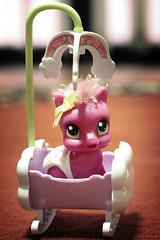 A Toy A Day 70/365 (JasonCJB) Tags: toy pony mlp mylittlepony 365toyproject naptimewithcheerilee