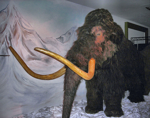 Woolly Mammoth - Horniman Museum, London.