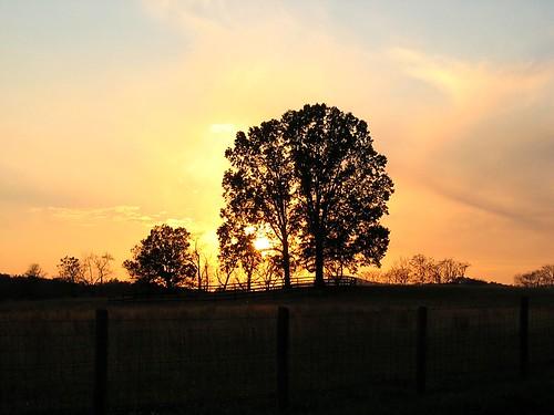 NoVA_Nov_4_2007 sun_tree