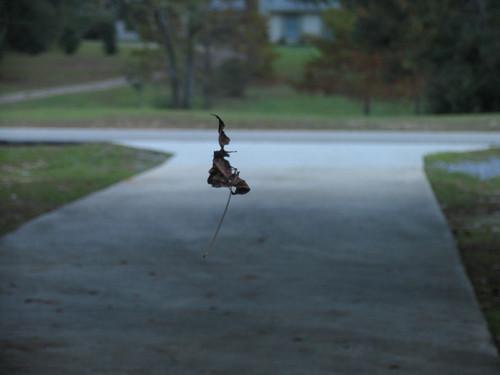Hanging leaf - November 11, 2007