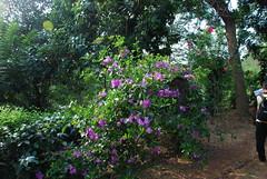 DSC_0192 (mwfeedback) Tags: white tea plantation handunugoda