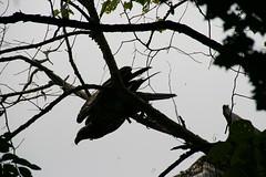 082407 012 (rpealit) Tags: scenery wildlife bald eagles