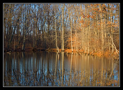 Morning Light (Artem Portnoy) Tags: trees winter lake reflection nature morninglight statenisland passionphotography