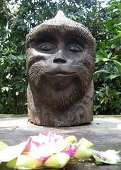 Monkey Forest_entrqance