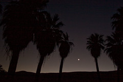 Midnight at the Oasis (My Name is Merle) Tags: palmtrees sanandreasfault oases inthelight palmspringsca butitwasdark ofthecuahillaindians andwedidntseemuch wellgobacksomeday imsureitsamazing thereareruinshere utata:project=nocturnal2