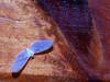 Inseto - 08 (Rafinha Shinta1) Tags: verde planta praia café animal água mar do maria natureza flor bonito chuva paisagem céu vermelho fruta abelha dourado amarelo peixe inseto ave borboleta cachorro basset macaco quarto nublado prédio sapo oriental decoração lagarto filhote mosca bolacha 08 horizonte siri ondas coqueiro joaninha papagaio lata arara prata aranha canário grão bugio carangueijo gafanhoto gaiola besouro bichinho pólem tesourinha vira enguia fedida siriri